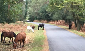 Southbourne Holiday Lets New Forest