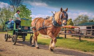 Southbourne Holiday Lets visit Dorset Heavy Horse Farm